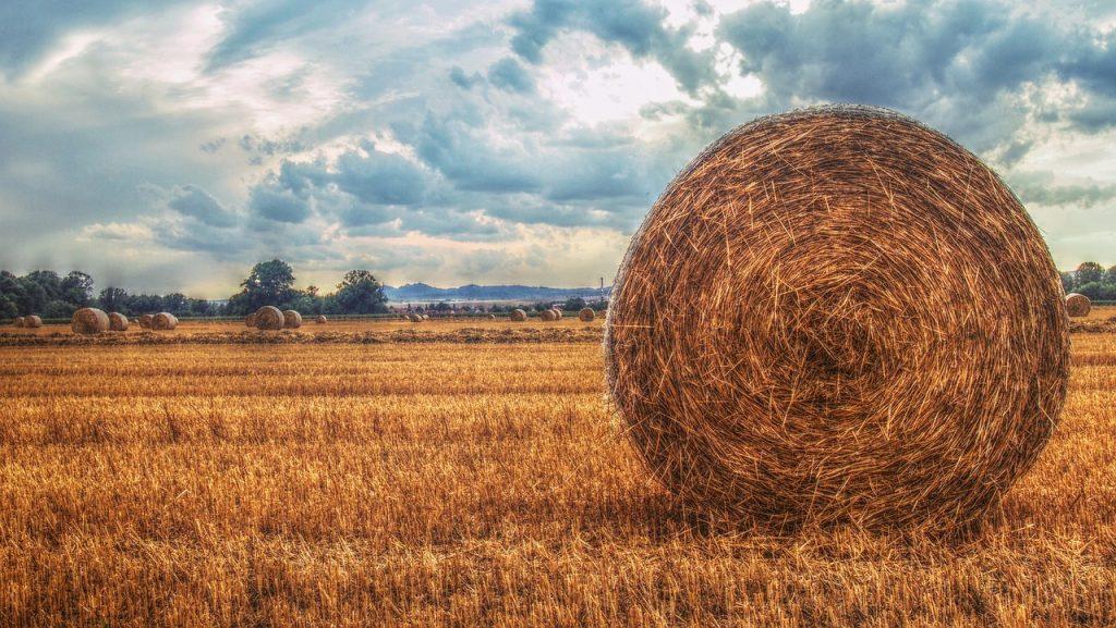 Maanviljelyn kehittyminen